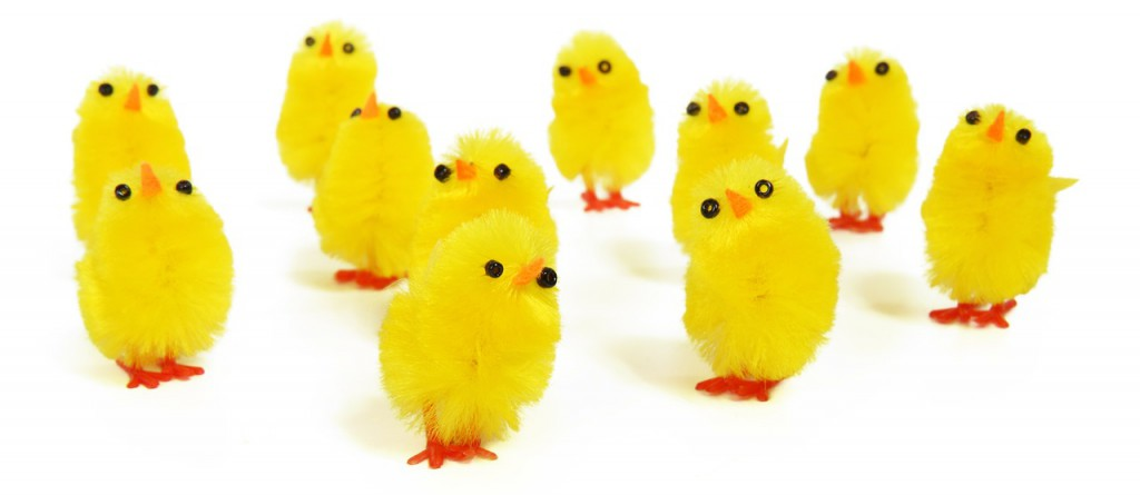 Yellow Chickens